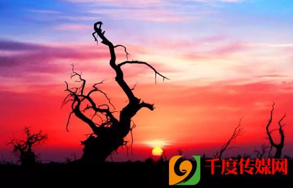 美!内蒙古额济纳旗的胡杨林……