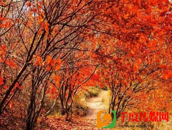 济南市章丘区红山翠谷:邀您共赴一场醉美红叶之约